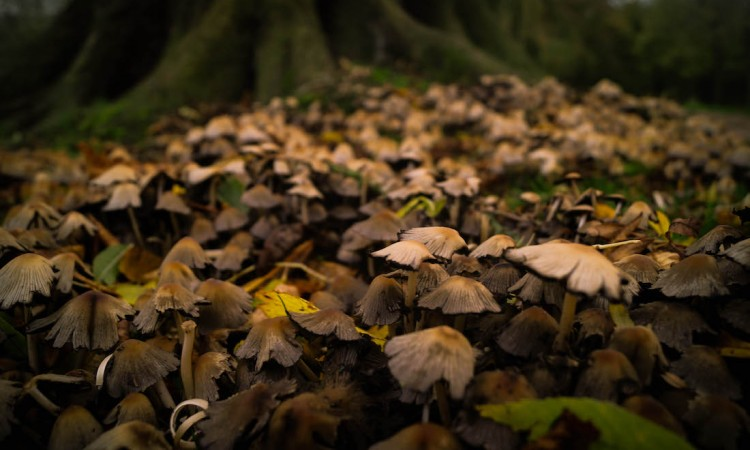 mushrooms-in-autumn